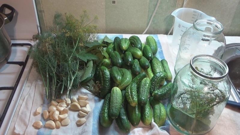 Вкусные рецепты летних заготовок: засолка огурцов на зиму холодным способом